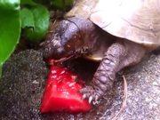 Watermelon Loving Cute Animals