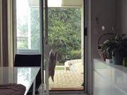 Breaking News: A Cat Is Scaling A Window