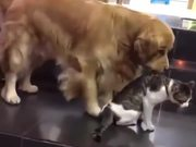 Dog Prevents Cat Fight
