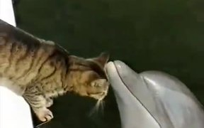 Cat and Dolphin