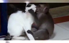 The Funniest Animal Videos