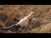 Mia and the White Lion Trailer
