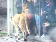 Bearing Witness to Zoo Animals