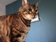 The Autotune Cat