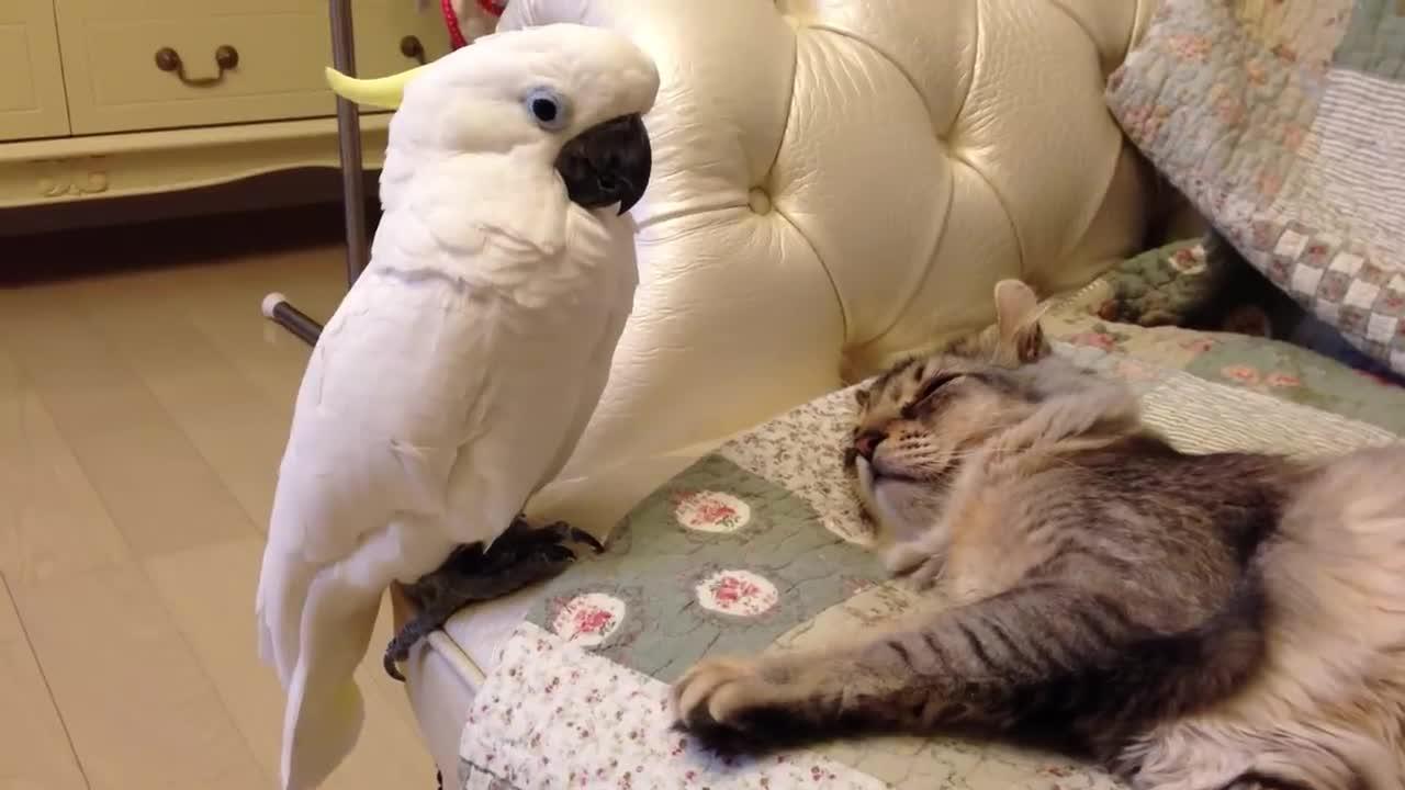 Котик и птичка гифка, надписью