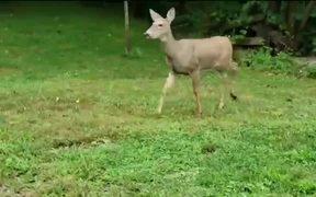 In The Deer 2nite