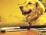 Good Music Makes Dogs Smile