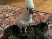 When Parrots Get Dog Fever