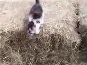 The Flying Kitten Is Here