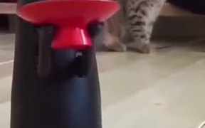 Cat Has No Idea Whats Going On!