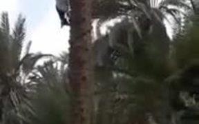 The Alien Tree-Climbing Goat