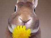 Rabbit Eats A Flower