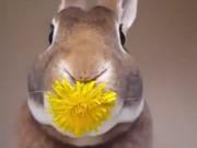 Rabbit Eats A Flower