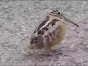 Move Your Body Little Birdie