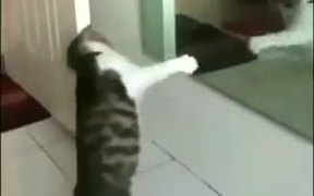 Cat Shadow Boxing Using A Mirror