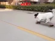 A Skating Loving Dog