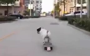 A Skating Loving Dog