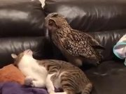Owl Vs Cat