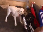 Dog Just Hates Motorcycle Exhaust