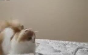 Fluffy Cat On Defense Mode
