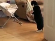 Cat Watching A Baby On Two Legs
