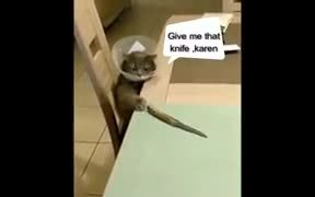Psycho Cat Hungry For Knife