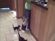 Hungry Kittens Are A Problem
