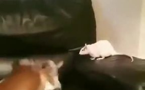A Cat, A Mouse, And A Dog