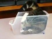 Cat Fitting Inside A Box