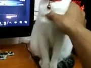 Cat Playing Statue Game