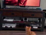 Cat Running Scared Of Puma