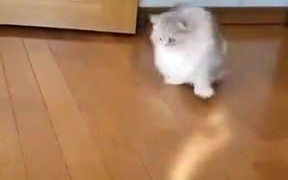 How To Make Your Cat Do Dusting