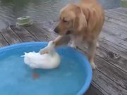 A Dog And A Duck