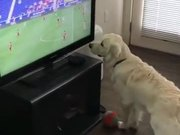 Dog Wants The Football On TV