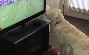 Dog Wants The Football On TV