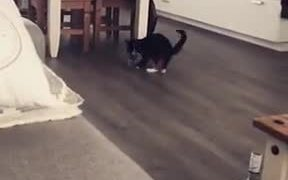 Cute Fetching Game With A Cat