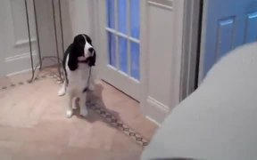 These Dogs Are Seriously Hungry By Their Actions