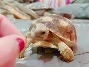 Cute Pet Tortoise Eating