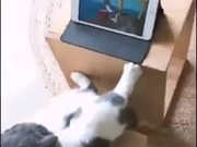 Cat Watching Tom And Jerry