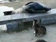 Cat Bullying Poor Seal