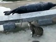 Cat Bullying Poor Seal