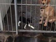 Dog Sad For His Mate