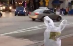Plastic Bags Are Getting Out Of Hand
