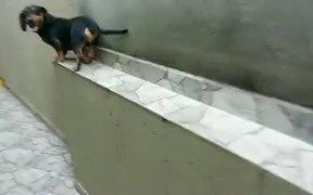 A Dog That Can Run Backward