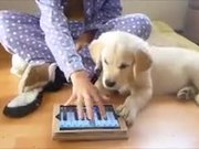 Doggy Doesn't Like Random Piano Playing