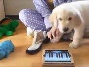 Doggy Doesn't Like Random Piano Playing