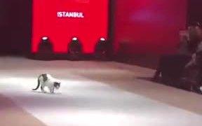 Cat Walking On The Ramp