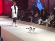 Cat Walking On The Ramp