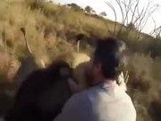 Have You Shoved A Tiger To Hug A Lion?