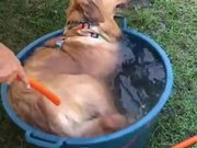 Tub Swim Time For Pupper
